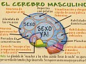 Spain - 2007 - Erotic - Erotic Joke - El Cerebro Masculino - Joke,Brain - c.b.nº153 - 1