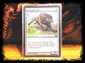 United States - Wizardz - Magic - No - Rara Foil - Savannah lions - 1